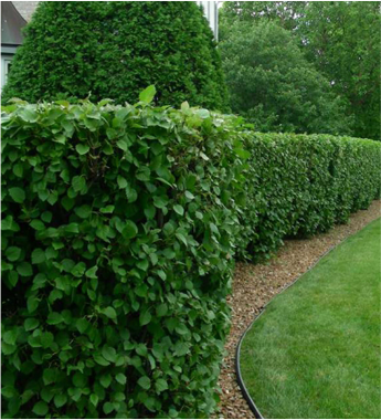 shrub maintenance Landscapes College Station TX